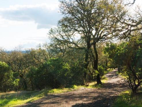 Image of Foothill Regional Park in Windsor, California.