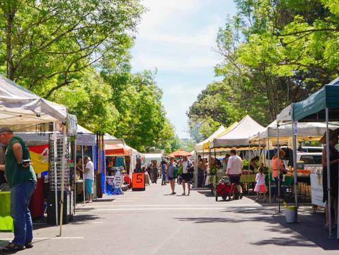Farmers market tents stand under an avenue of green trees in Petaluma, California