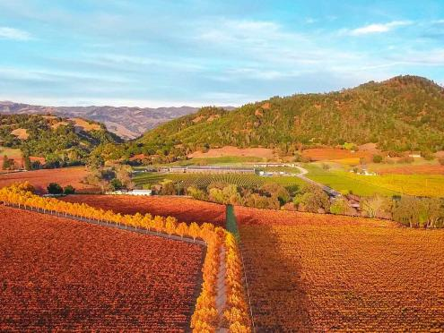 Bright orange and yellow leaves under a vibrant blue sky color the vineyards in fall time in Sonoma County