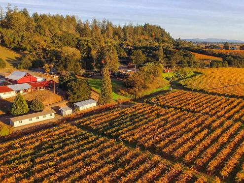Birds eye view of the yellow autumn vineyards at Wilson Winery in Dry Creek Valley