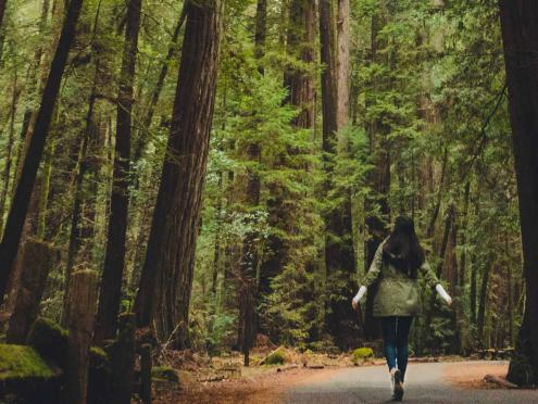 woman walking through Armstrong Redwoods State Reserve in Sonoma County
