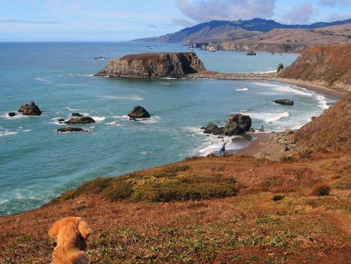 A dog looks out over the Sonoma Coast at Blind Beach