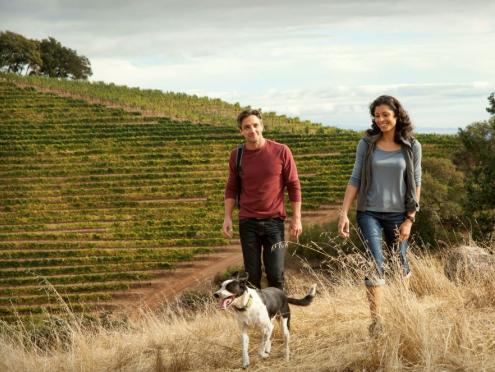 Picture of couple walking with dog near vineyards