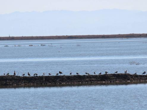 Birds sit along a jetty in the refuge in Sonoma County