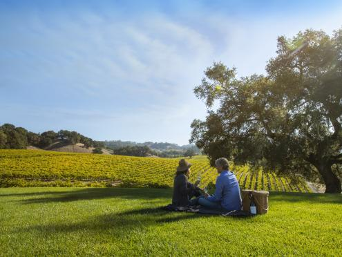 Picture of couple having a picnic on the grass overlooking vineyards