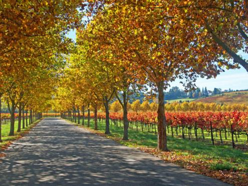 alexander_valley_fall_vineyards_600x450.jpg