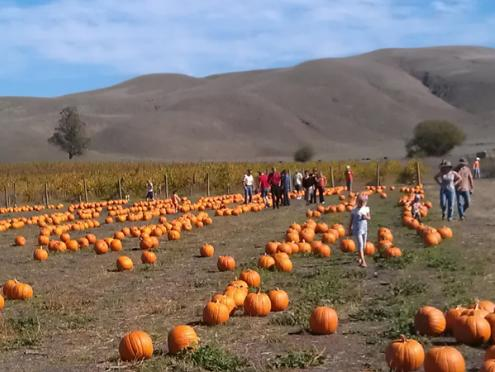 Tolay Fall Festival_sonoma_county.jpg