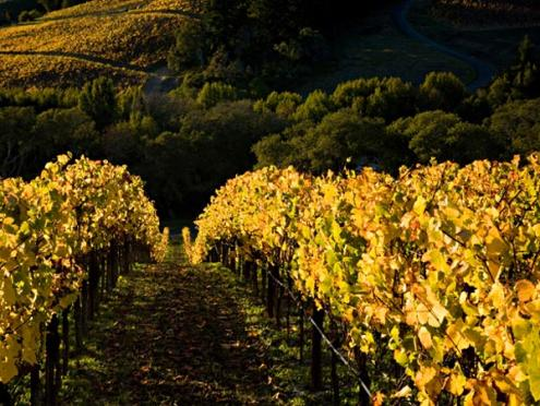 phelps_fall-vineyard_600_450.jpg