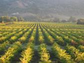 Vineyards of Johnson's Alexander Valley