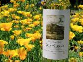 MacLeod Family Vineyard