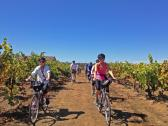 Biking through the Vineyards - Biking through the beautiful vineyards of Russian River Valley Region