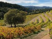 Wine Country Journeys