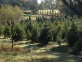 Garlock Tree Farm