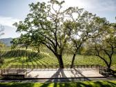 B.R. Cohn Winery & Olive Oil Company ampitheater