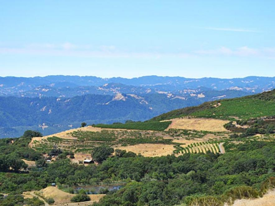 Pine Mountain-Cloverdale Peak Wine Region and Appellation