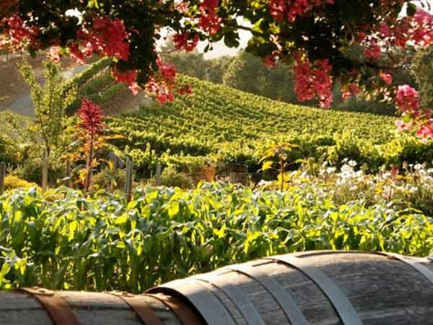 Top Farm-to-Table Restaurants in Sonoma County